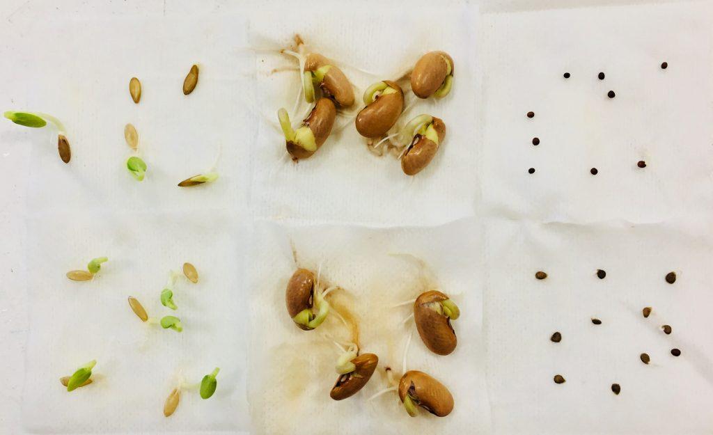 Testez vos semences