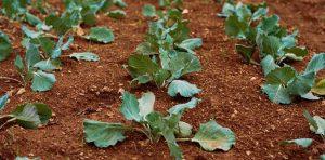 démarrer potager vegetable garden community jardins communautaires