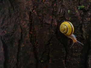 Les insectes : alliés du jardin! (photo S. Picard)