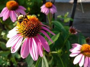 Les insectes : alliés du jardin!