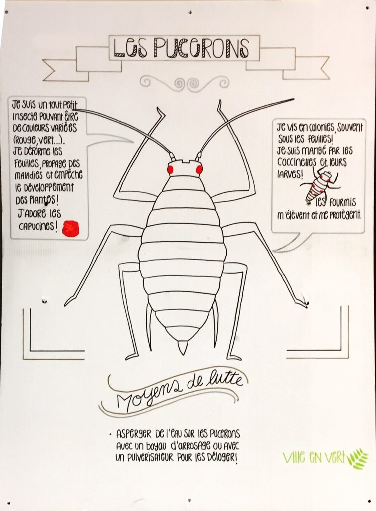 Quelques insectes et un jardin