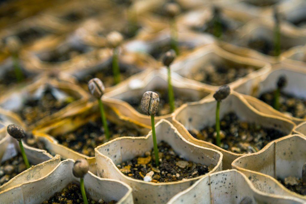 Semer des végétaux en automne