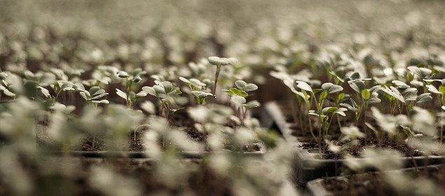semis semences test germination jardin communautaire