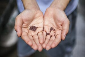 semences graines