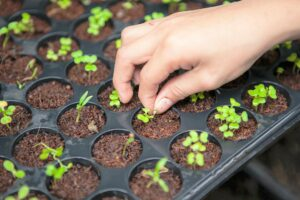 semis semences intérieur