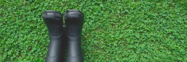 pelouse trèfle clover lawn